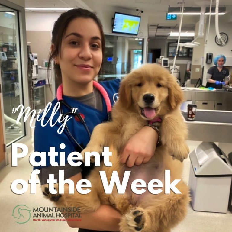 Patient of the Week – Milly