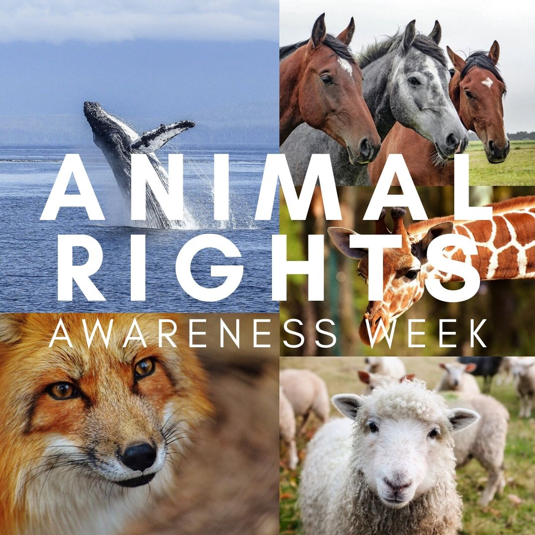 It's Animal Rights Awareness Week