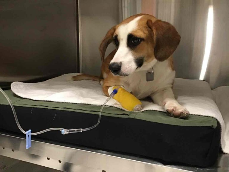 Patient of the Week – Mabel