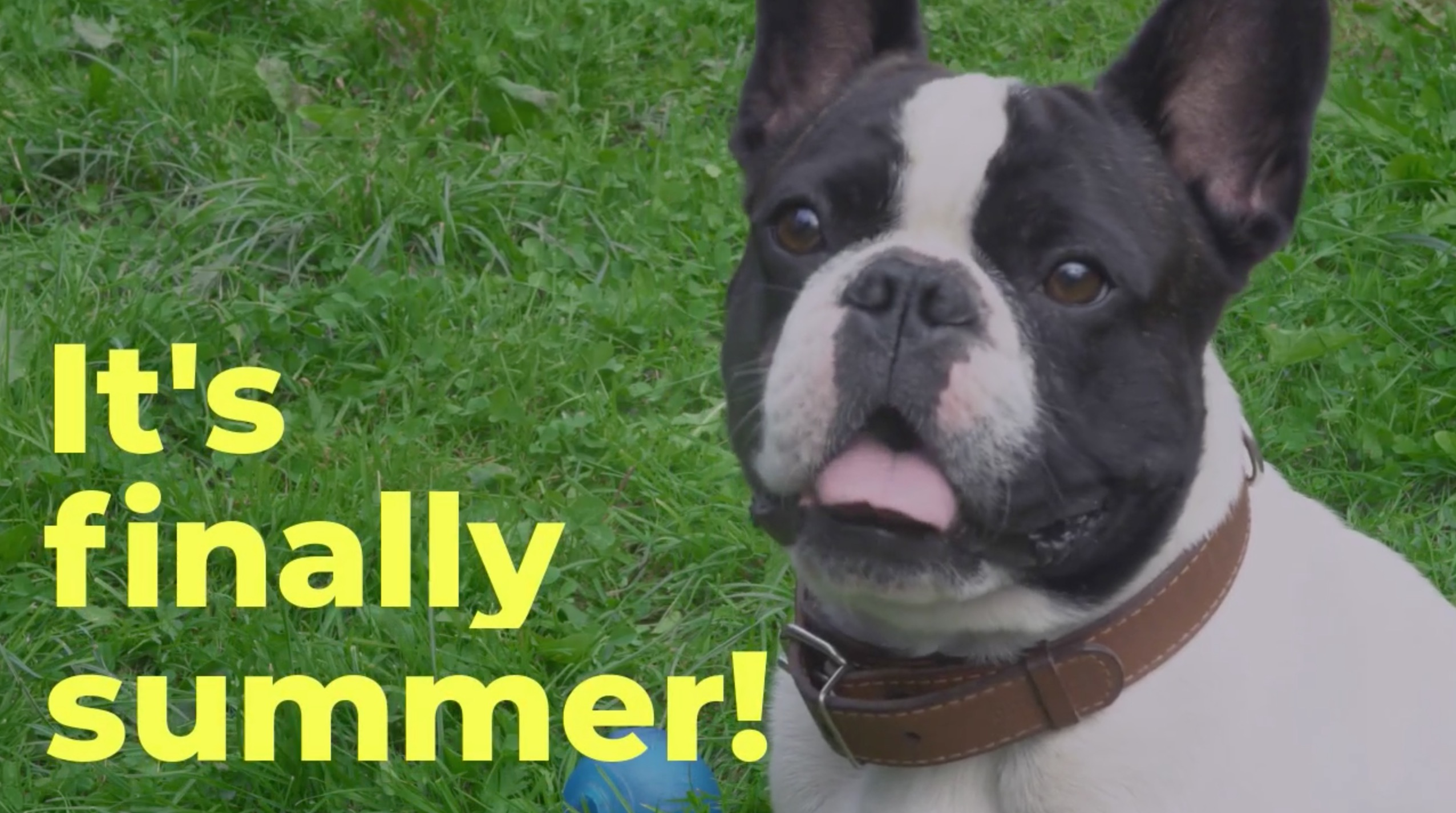 , Summer's Here! Keep Your Dog Safe!