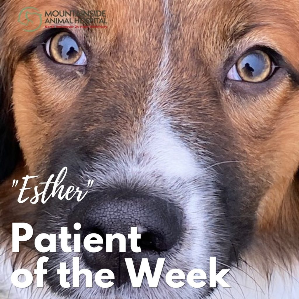 Patient of the Week – Esther March 10, 2021
