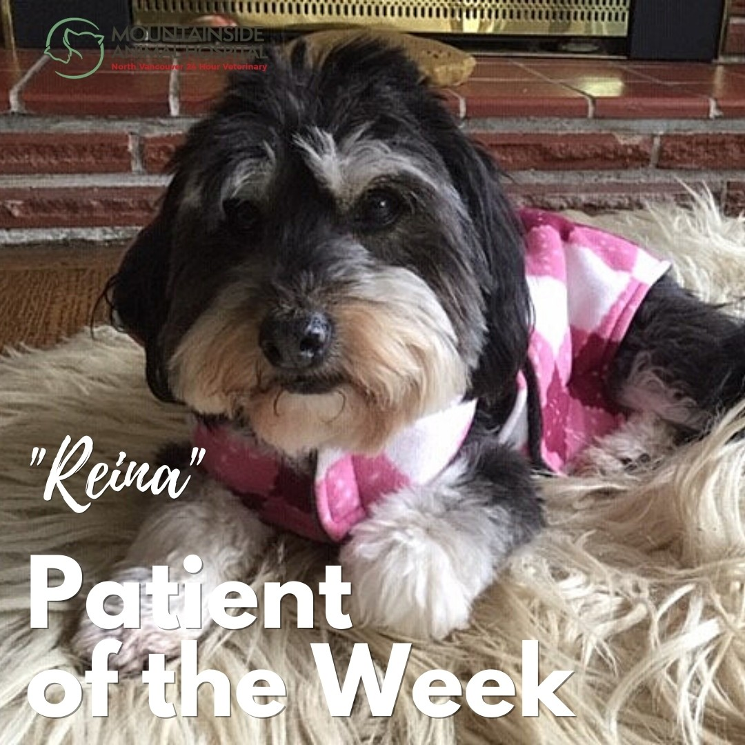 Patient of the Week – Reina March 31, 2021