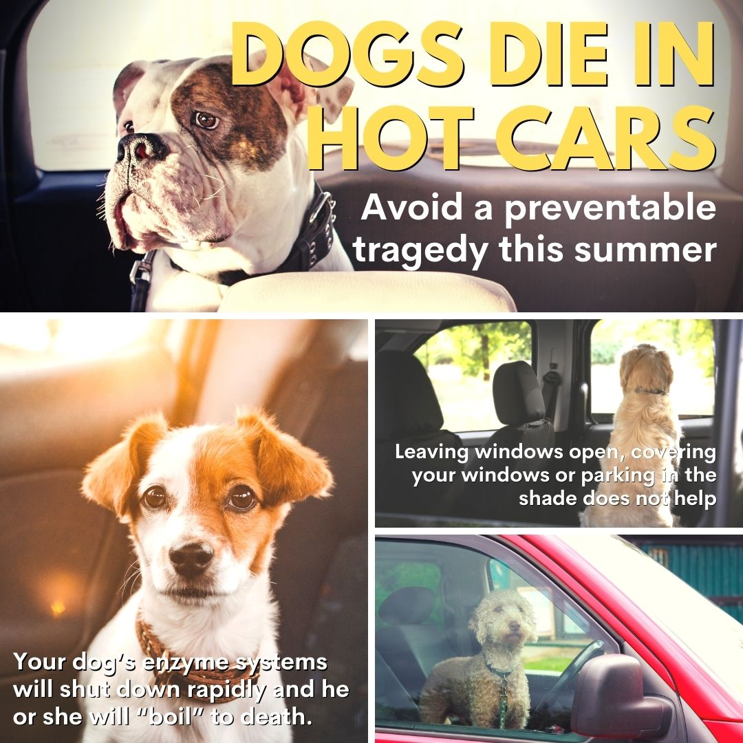 Caution: DOGS DIE IN HOT CARS – A Summertime Warning