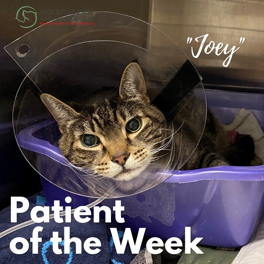 Patient of the Week – Joey Moser April 14, 2021