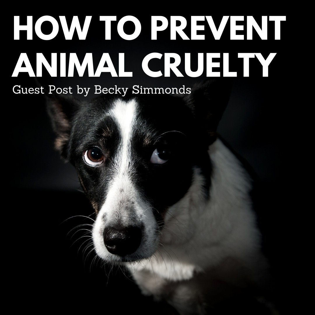 How to Prevent Animal Cruelty – Guest Post by Becky Simmonds