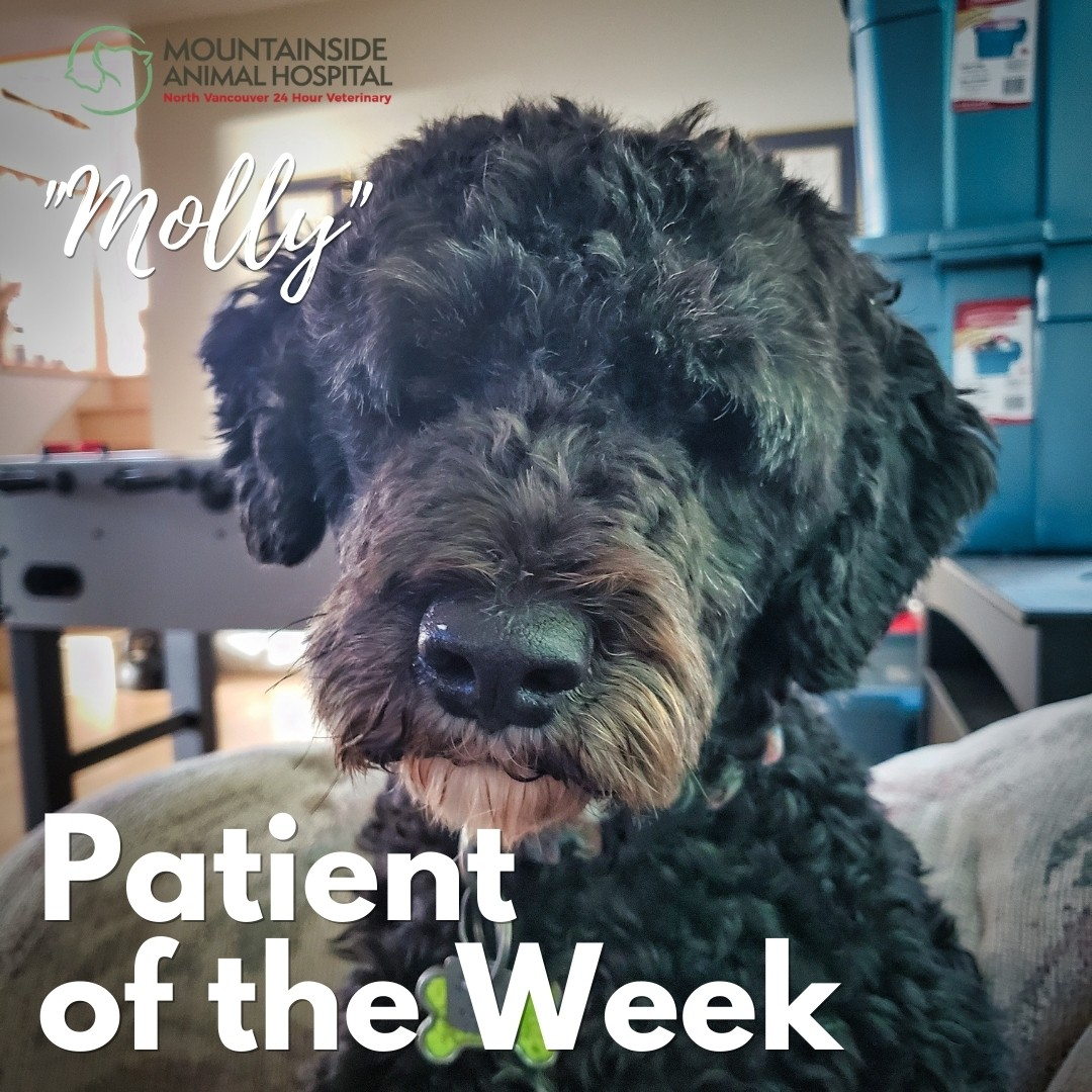 Patient of the Week – Molly May 12, 2021