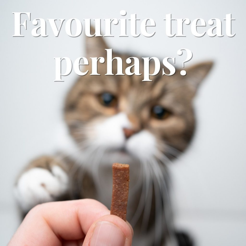 Pet Appreciation Week – How Will You Celebrate Your Pet?