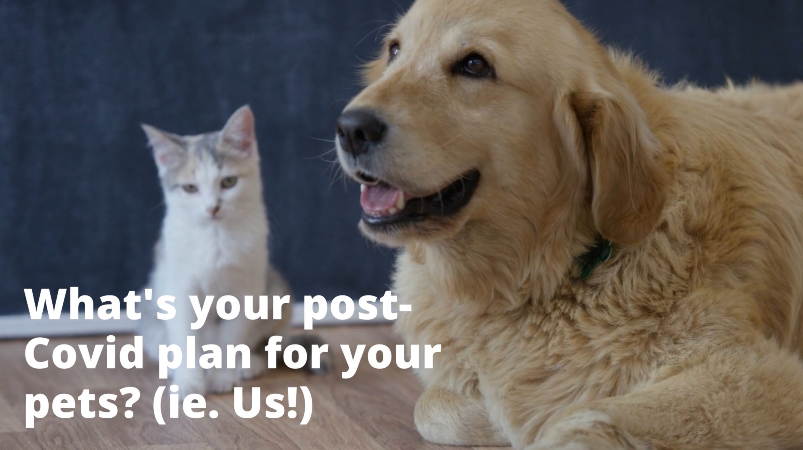 What's Your Post-Covid Pet Care Plan?