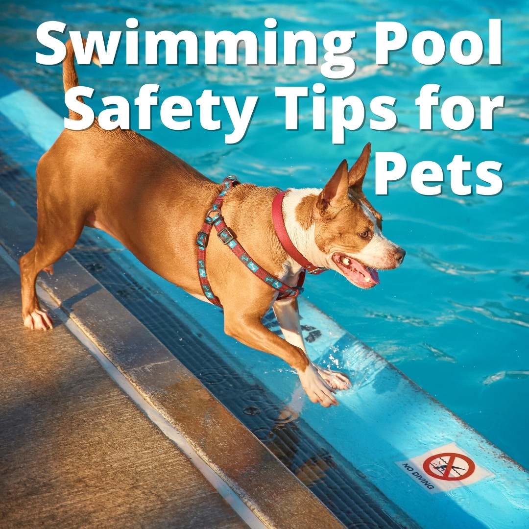 Swimming Pool Safety Tips for Pets