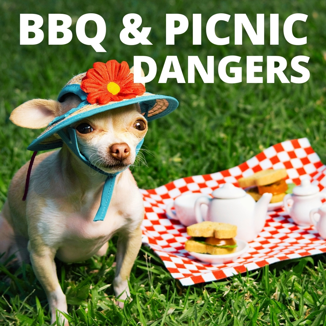BBQ and Picnic Dangers