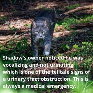 Patient of the Week – Shadow