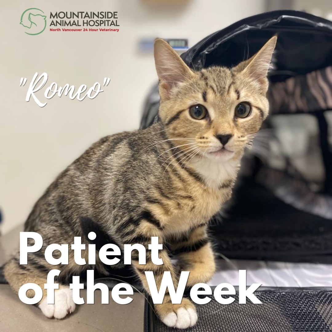 Patient of the Week – Romeo