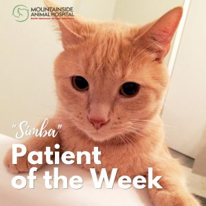 Patient of the Week – Simba